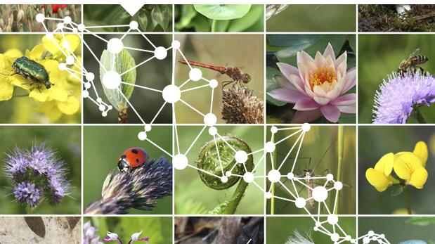 Madrugan Grupo Salinas y Partido Verde con Ley de Biodiversidad